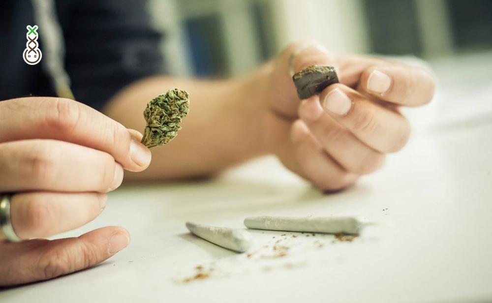 verschil tussen Hasj en weed