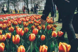 best free hotspots amsterdam