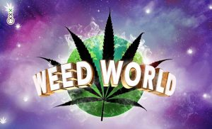WEED WORLD groningen